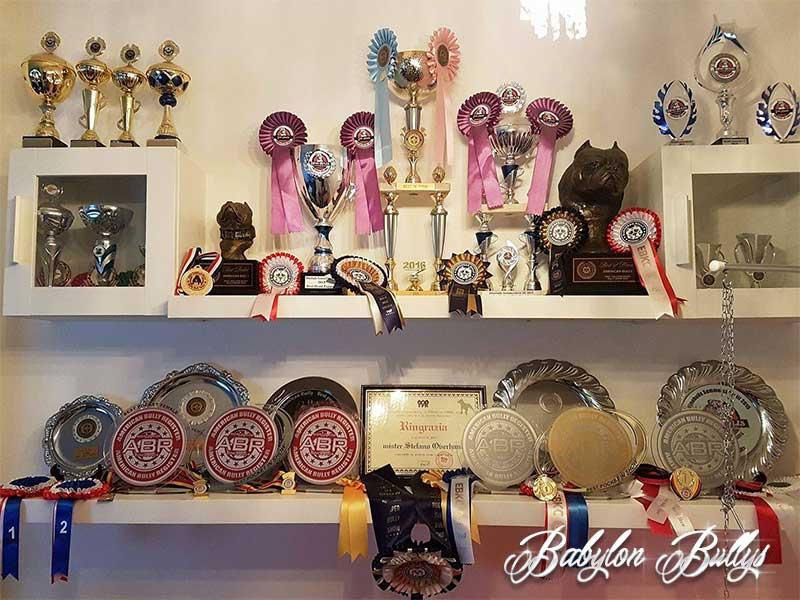 awards_babylonbullys