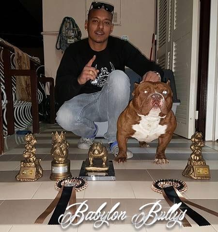 babylonbullys-don-dada-2017