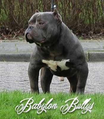elchapo_babylonbullys6