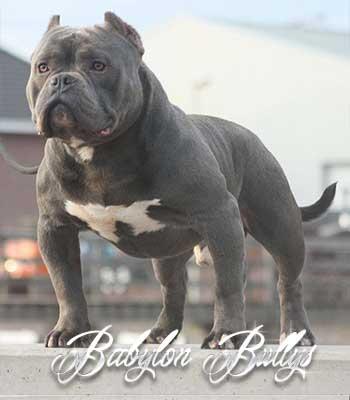 elchapo_babylonbullys10