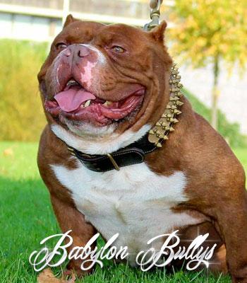 bablyonbullys_dondada1