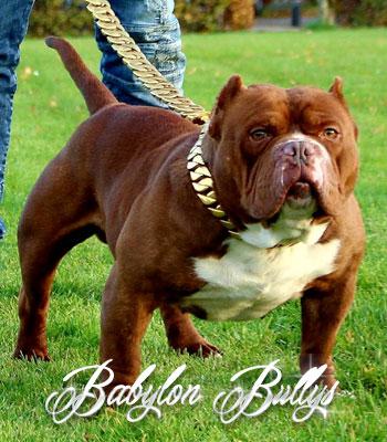 bablyonbullys_dondada5