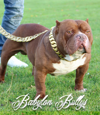 bablyonbullys_dondada6